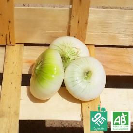 Oignon blanc bio vrac - ferme 9TER