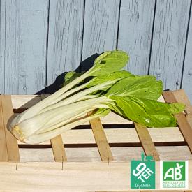 Pak Choï bio - ferme 9TER