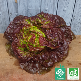 Salade Laitue rouge bio - ferme 9TER