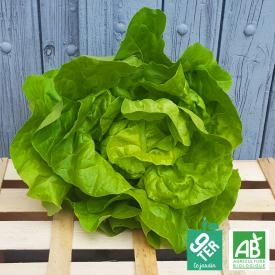 Salade Laitue bio 9TER