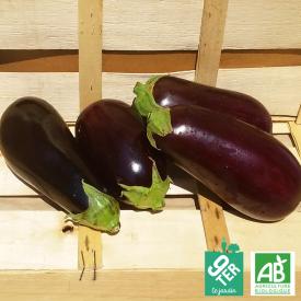 Aubergine violette bio 9TER
