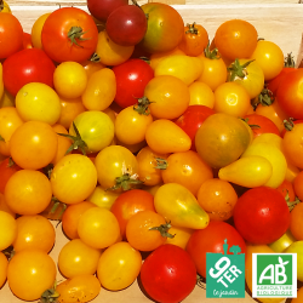 Tomates cerise bio Ferme 9TER