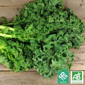 Chou Kale bio Ferme 9TER